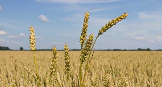 L'impact de la météo sur l'agriculture