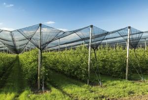 Grêle : Filets de protection anti-grêle pour exploitation agricole