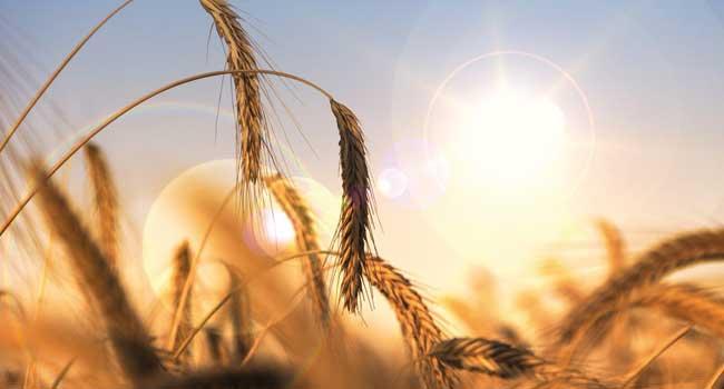 météo dans l'agriculture : quels usages