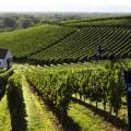 Station météo pro pour viticulteurs